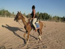 safari horse ride excursion from sharm el sheikh